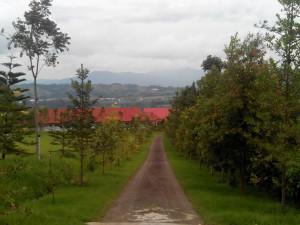Jalanan masuk menuju Rumah Retret Maria Bunda Karmel, Ruteng, Flores, NTT / Foto: REtno Wulandari (Dok. Komsos KWI)